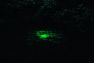 Robert  Zhao Renhui - [plate 37] Glow in the dark Fish at Sunset